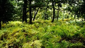Forest of Dean Woodland, nr Hillesland, Gloucestershire (© © Copyright Ray Bird (https://www.geograph.org.uk/profile/124022) and licensed for reuse (https://www.geograph.org.uk/reuse.php?id=5840309) under this Creative Commons Licence (https://creativecommons.org/licenses/by-sa/2.0/).)