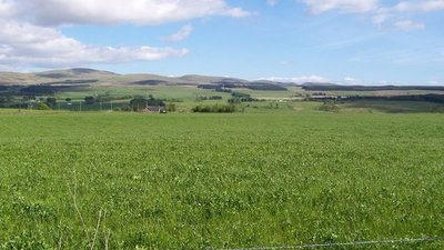 Grassy Field with Ochil Hills Behind near the caravan site (© © Copyright Dominic Dawn Harry and Jacob Paterson (http://www.geograph.org.uk/profile/2422) and licensed for reuse (http://www.geograph.org.uk/reuse.php?id=179829) under this Creative Commons Licence (https://creativecommons.org/licenses/by-sa/2.0/).)