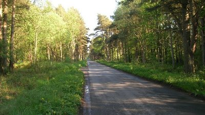 Minor road towards Scarborough through Broxa Forest  (© © Copyright JThomas (https://www.geograph.org.uk/profile/35313) and licensed for reuse (http://www.geograph.org.uk/reuse.php?id=1874636) under this Creative Commons Licence (https://creativecommons.org/licenses/by-sa/2.0/).)