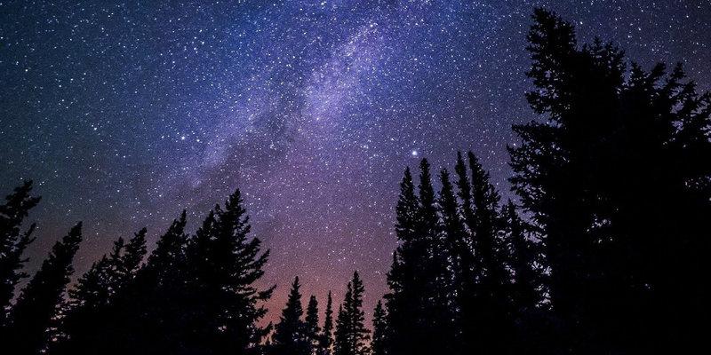stargazing-trees1